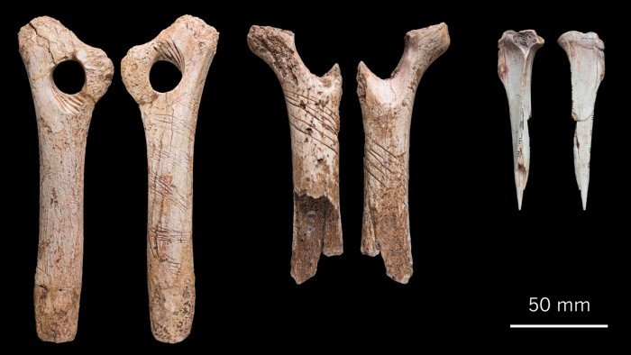 Careful incisions on remains such as these hare bones and reindeer antlers have now been found on human bone.