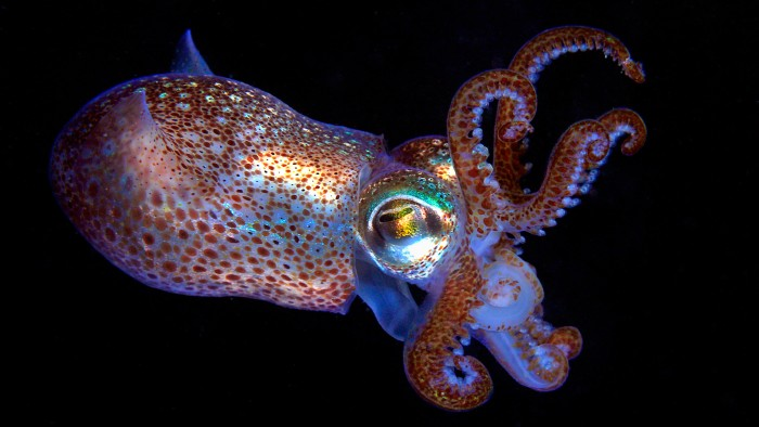 Animals such as the bobtail squid can change colour thanks to their adoption of a bacterial gene.