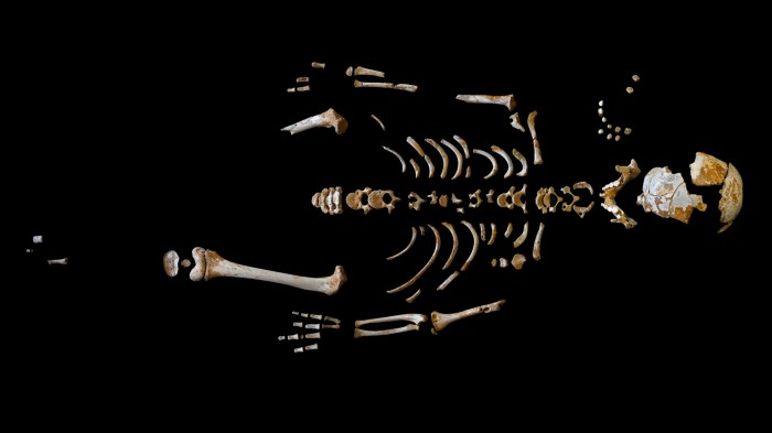 This partial Neanderthal skeleton is one of 13 to be recovered from the El Sidrón cave system in Asturias, Spain.